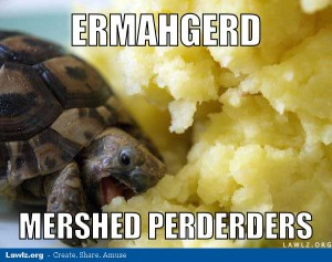 turtle-meme-ermahgerd-mershed-perderders-eating-mashed-potatoes (1)